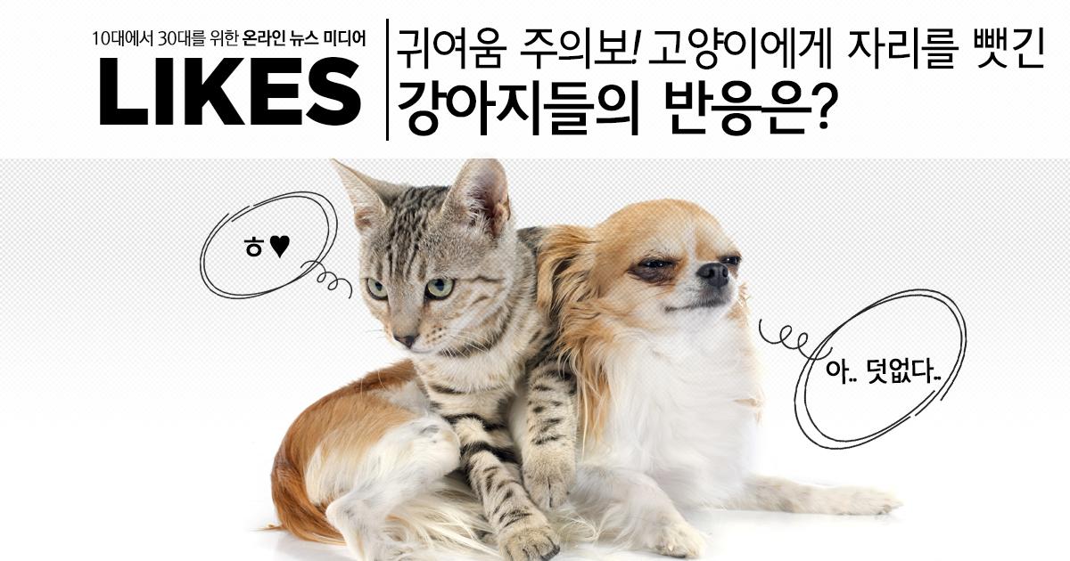 귀여움 주의보! 고양이에게 자리를 뺏긴 강아지들의 반응?